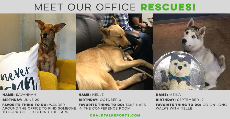 Meet our office rescues - Savannah, Nelle & Meika